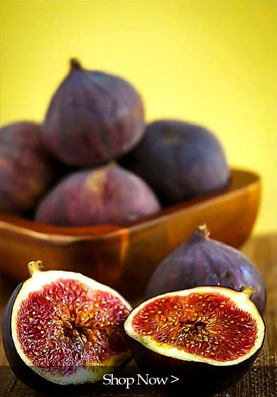 PlantOGram Figs