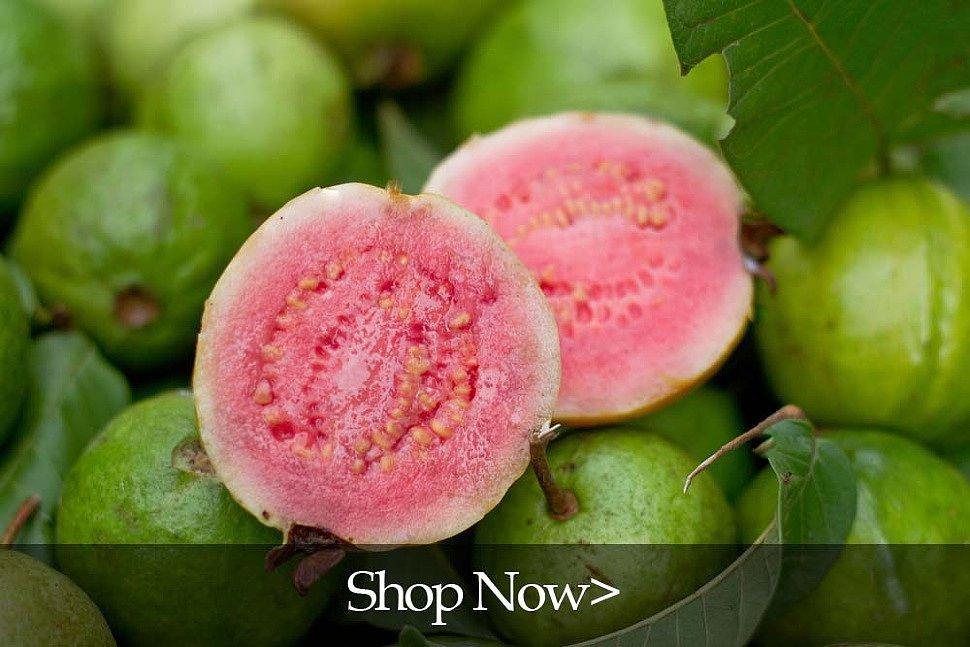 PlantOGram Guava