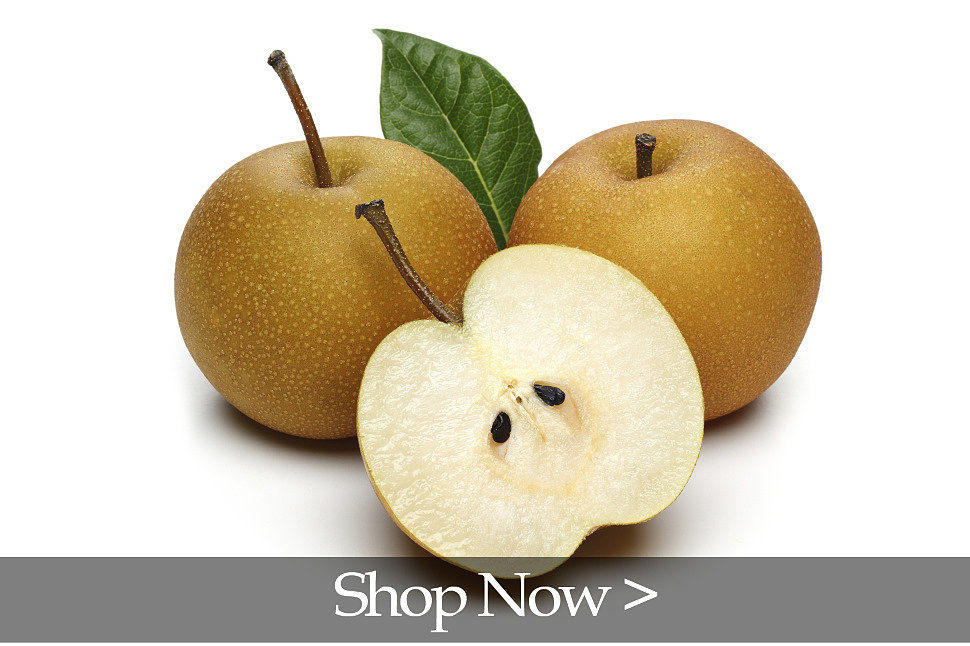 PlantOGram Asian Pear