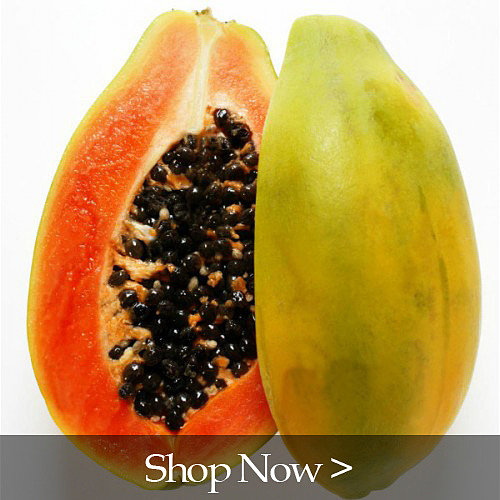 PlantOGram Papaya