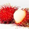 Rambutan Tree - Rambutan Fruit