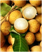 Longan Tree Kohala Variety Air-Layered