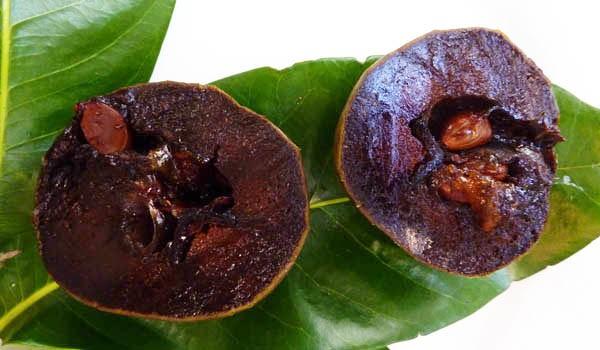 black sapote fruit avocado fruit