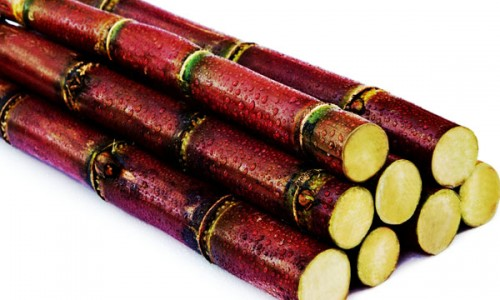 Image result for red sugar cane
