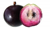 Caimito/ Star Apple Tree Purple Variety