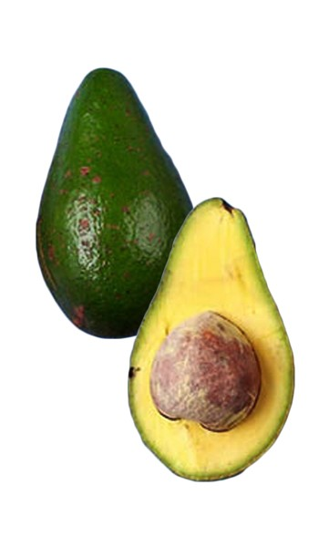 Avocado Tree Hall Variety Grafted Avocado Tree Hall Variety Grafted in a 3 Gallon Container. This is a large tasty pear shaped fruit 24-30oz., and the tree exhibits excellent tolerance to the cold. Season October-November. Makes a great shade tree.