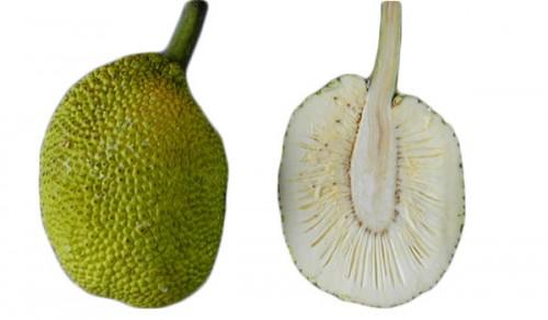 Breadfruit The Breadfruit skin texture ranges from smooth to rough to spiny. The color is light green, yellowish-green or yellow ripe fruit have yellow or yellow-brown skin and soft, sweet, creamy flesh that can be eaten raw or cooked.