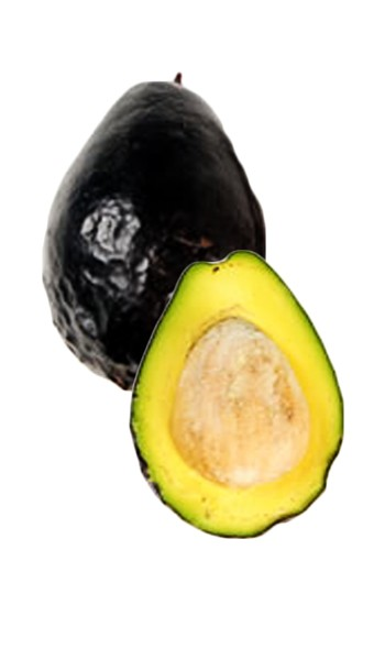 Avocado Tree Brogdon Variety Grafted 