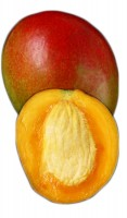 Mango Tree Zill Variety Grafted