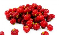 Surinam Cherry Red Variety Tree