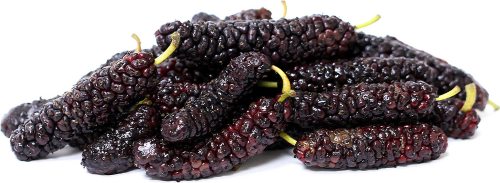 Mulberry Tree Pakistan Variety Mulberry Tree Pakistan Variety in a 3 Gallon Container. Mulberries taste similar to blackberries, and they will stain your hands and lips like black berries as well. They are excellent eaten right out of hand, but they are often used to preserves, jellies, and jams. The leaves of the mulberry are cultivated in many parts of the world as food for silk worms. This is a collectors variety and produces fruit that are 4-6 inches long, a great conversation piece.