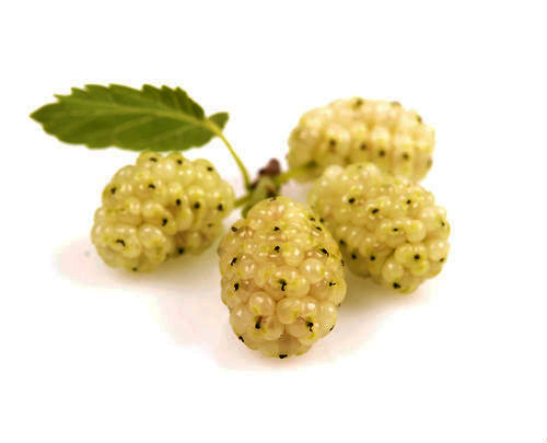 Mulberry Tree White Variety Mulberry Tree White Variety in a 3 Gallon Container. Mulberries taste similar to blackberries, and they will stain your hands and lips like black berries as well. They are excellent eaten right out of hand, but they are often used to preserves, jellies, and jams. The leaves of the mulberry are cultivated in many parts of the world as food for silk worms. White mulberries are an Asian favorite.