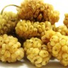 Mulberry Tree White Variety - White Mulberry Fruit