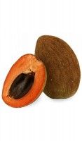 Mamey Tree Grafted