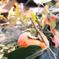 Three Fall Fruits You Need for your Thanksgiving Table