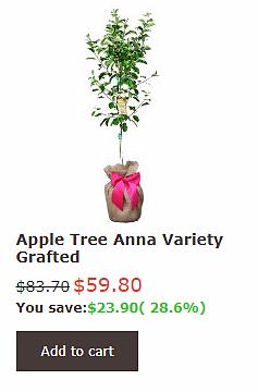 Anna Apple