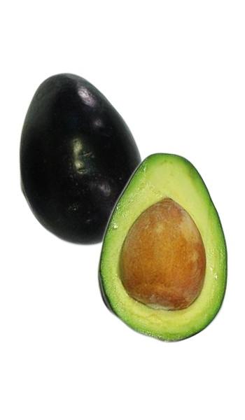Avocado Tree Brazos Belle Cold Hardy Variety Grafted