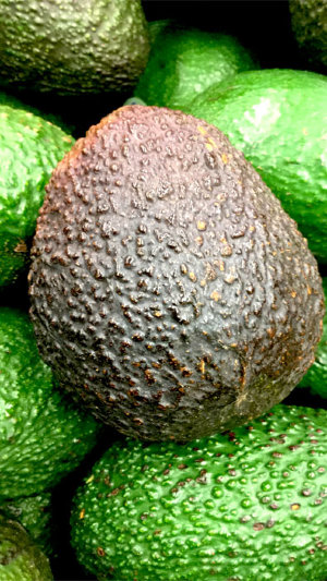 Avocado Tree Super Hass Variety Grafted