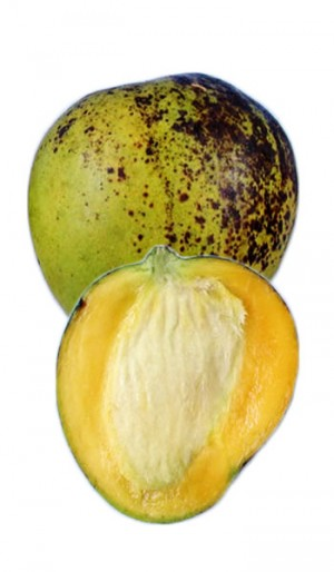 Mango Tree Ice Cream Dwarf Variety Grafted