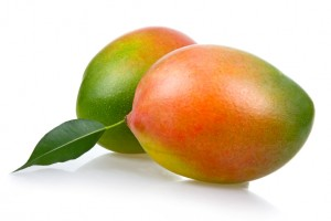 Mango Tree Keitt Variety Grafted