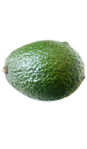 Avocado Tree Fantastic Cold Hardy Variety Grafted