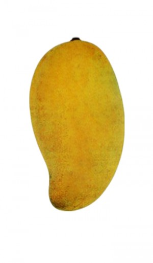 Mango Tree Okrung Tong Variety Grafted