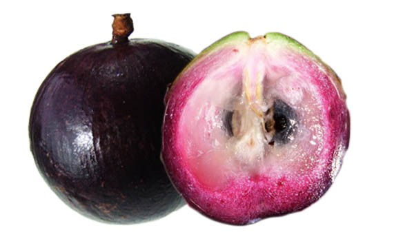 Star Apple Fruit Florida