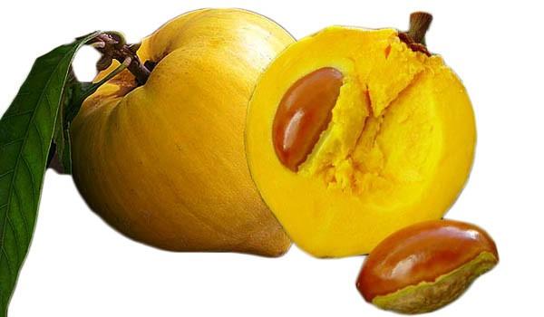 Canistel Egg Fruit Tree