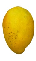Mango Tree Angie Variety Grafted