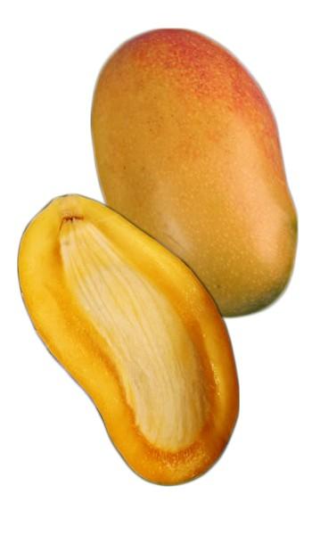 mango tree valencia pride variety grafted
