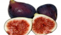 Fig Tree Black Mission Variety