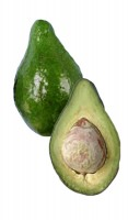 Avocado Tree Lula Variety Grafted