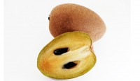 Sapodilla Tree Grafted
