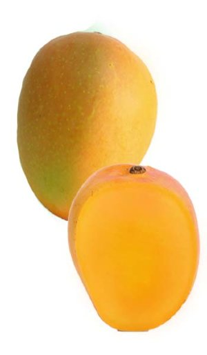 Mango Tree Orange Essence Designer Variety Grafted