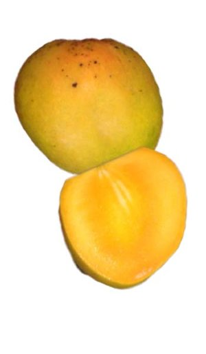 Mango Tree Honey Kiss Designer Variety Grafted