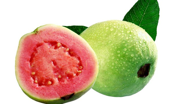 Guava Tree Dwarf/Container Variety