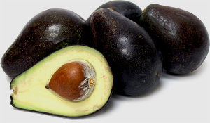 Avocado Tree Oro Negro Variety Grafted