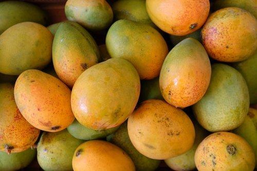 Mango Tree Pickering Dwarf Variety