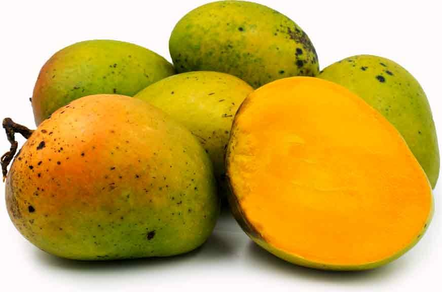 Mango Tree Alphonso Variety Grafted